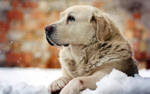 犬の寒さ対策について